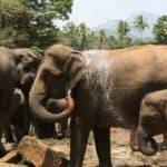 Elephant Family Sanctuary